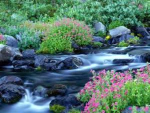 نهرهای بهشت2