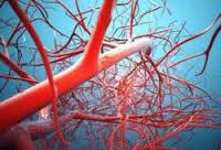 تشریح جریان و گردش دوری خون در بدن2