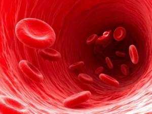 تشریح جریان و گردش دوری خون در بدن3